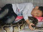 东莞13岁男孩与巨蟒同居12年