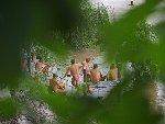 探访重庆裸泳滩